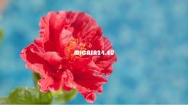 MHJLU-012019 - La Palma Top Anlage 6 / 15