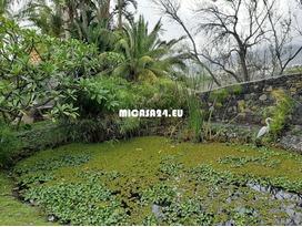NH-062021 - Luxusvilla mit weitläufigen tropischen Gärten in der Nähe von Los LLanos de Aridane 19 / 20