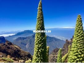 NH-21101 -  La Palma - Finca in Las Manchas 8 / 21